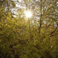 Стихотворение про весну прекрасную и красивую
